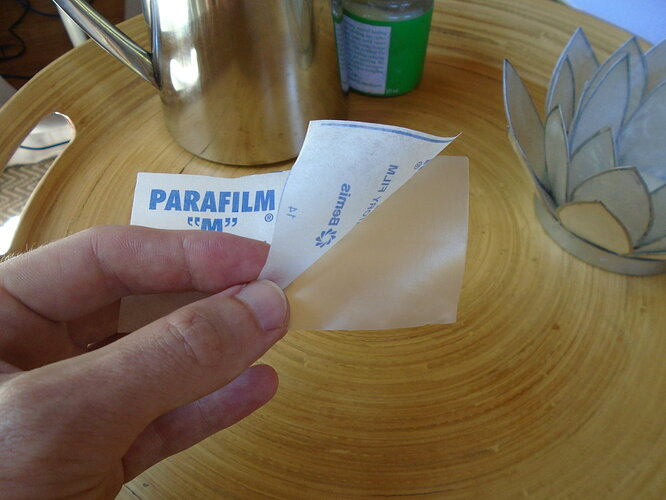 Peeling the paper off a piece of parafilm